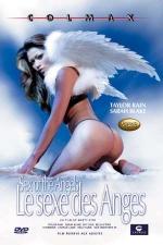 Le sexe des anges - DVD